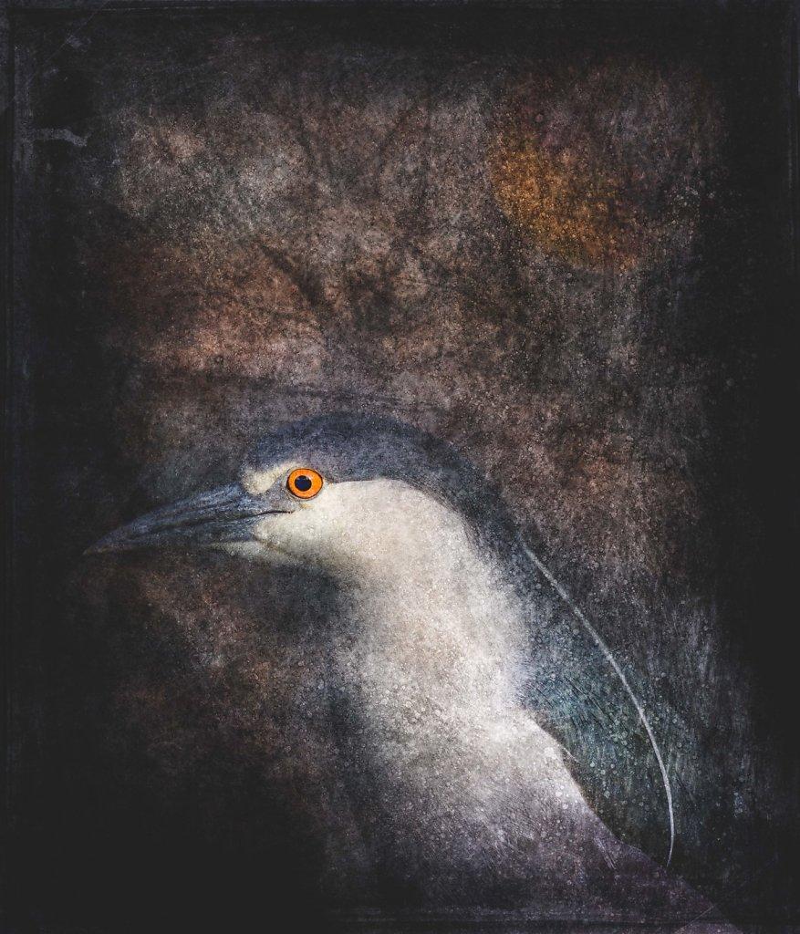 Avian Portraits